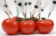 Genetyczne modyfikacje jako czynnik zagrożeń i szans we współczesnym świecie